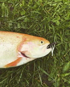Arrild Fiskesee Tipp